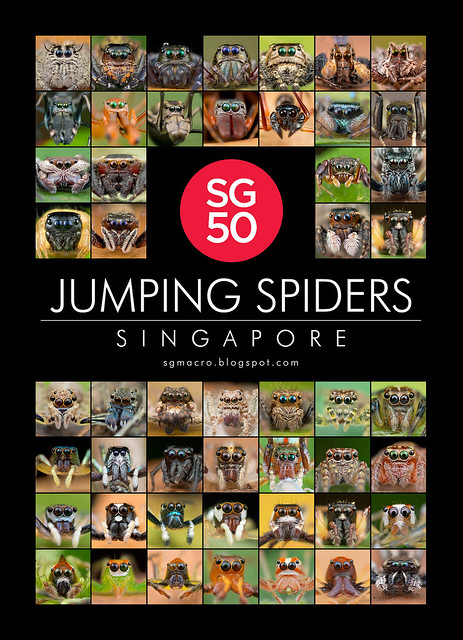 SG50 Jumping Spiders of Singapore