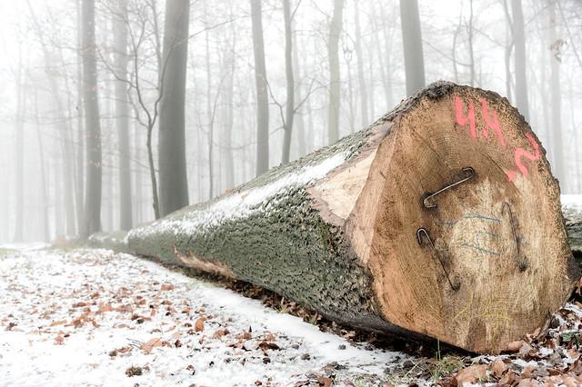 Ein Baum, RICOH PENTAX K-3 II, HD PENTAX-DA 21mm F3.2 ED AL Limited