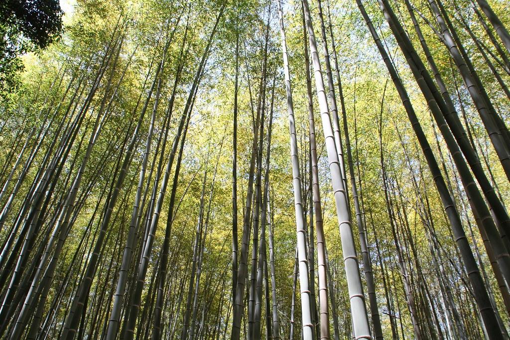 Arashiyama – Bambusskov (2)