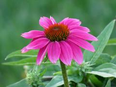 stray flower