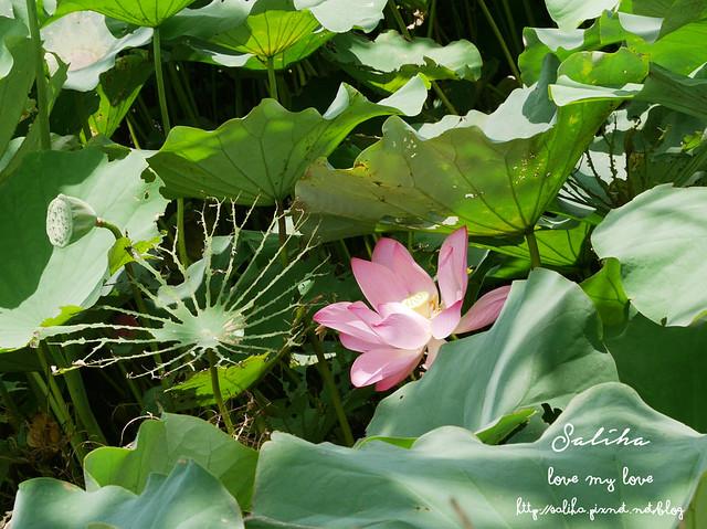 三峽蓮花景點 (22)
