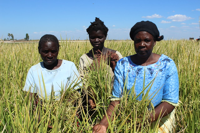 Women rice farmers, Situlu AAS Community, Barotse Floodplain, Mongu, Zambia. Photo by Jeston Kalembwe Lunda.