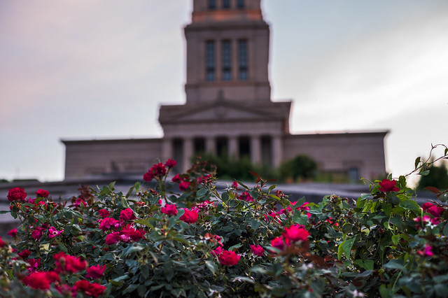 Roses at the George Washington Memorial Masonic Temple