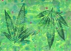 Cannabis Guacamole - 2015