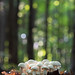 bokeh shrooms by marianna-away for a week