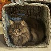 Cat in a basket #athome