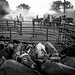 Rodeo B&W_MG_4646 by Kent Budge Photography