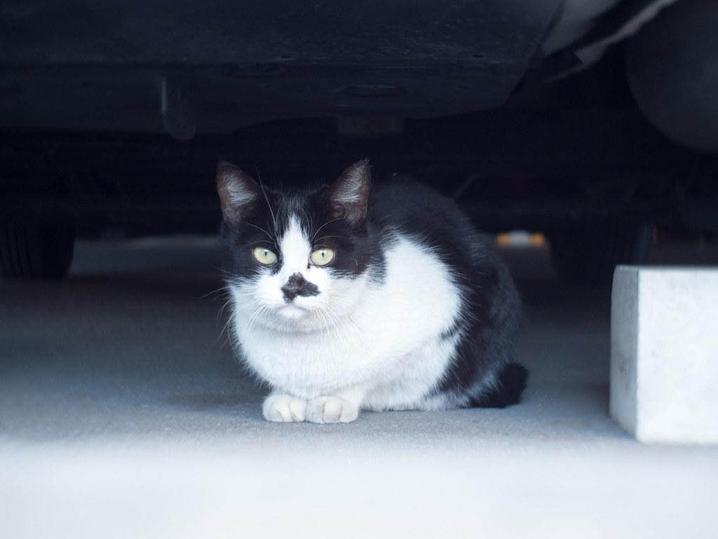 Stray cat f/2