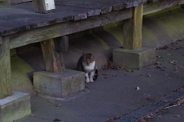 Today's Cat@2017-01-13