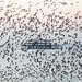 Brighton's West Pier & Starling Murmuration by lomokev