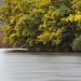 Na Rota das Mimosas  -  Enc. Fot. Coimbra  @  Rio Mondego
