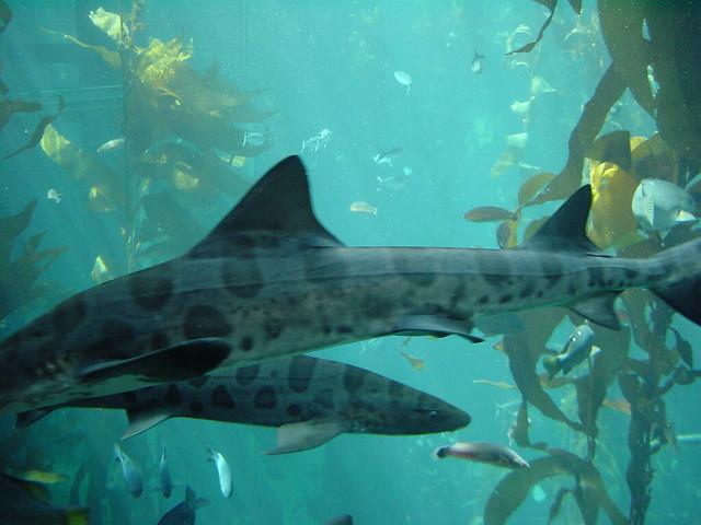 ... Forest, Monterey Bay Aquarium, California Flickr - Photo Sharing