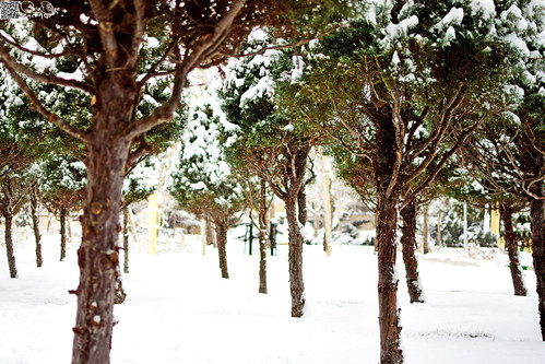 winter snow tree nature green snowing white cold landscape view garden perspective