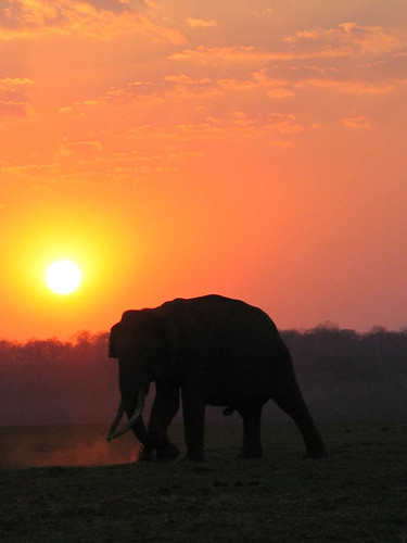 Elephant at Sun-set