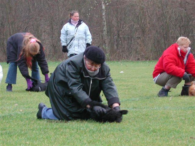 Image Result For Dog Training Lakeland