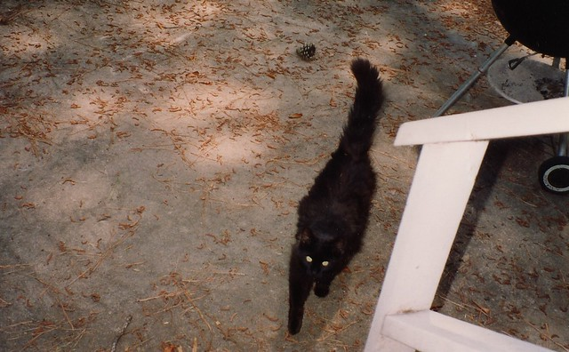 Our Cat, Midnight, 1992