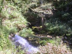 Stream Exits Squire Boone Cavern