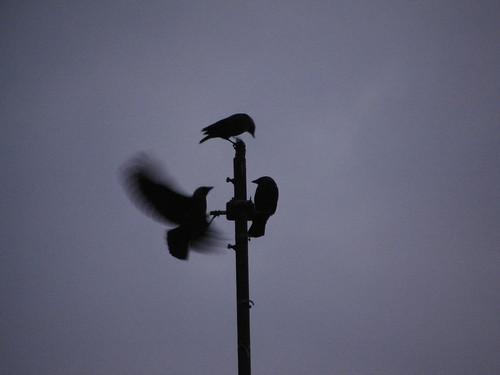 Birds story