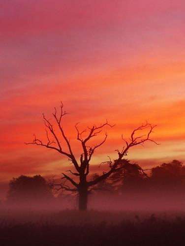 uk original red england mist tree dawn britain deadtree untouched slough berkshire kevday predawn langleypark neatimage chromatag chromaorangered chtk