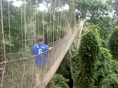woodland(1.0), suspension bridge(1.0), tree(1.0), canopy walkway(1.0), forest(1.0), rope bridge(1.0),
