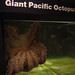 Feeding the Giant Pacific Octopus