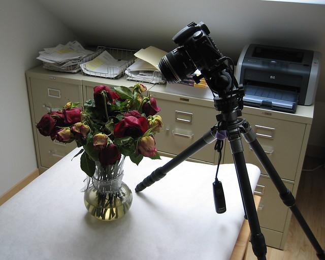 Macro setup for roses
