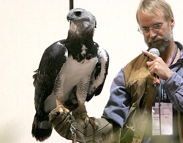 Comparação do tamanho de águias  com relação ao homem. 59216530_5c95fbcba2_z