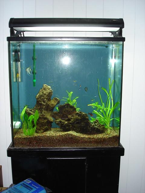 My fish tank flickr photo sharing for Fish tank full movie