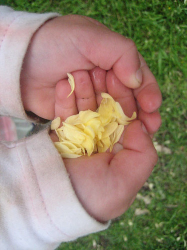 Rose Petals in a Child's Hands