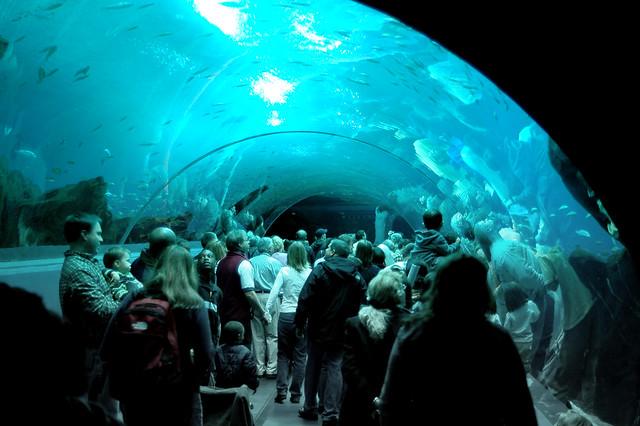 All Glass Aquarium Company