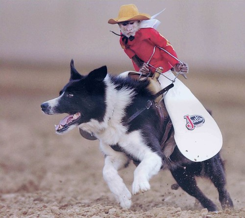 Cowboy Monkey Dog Jockey