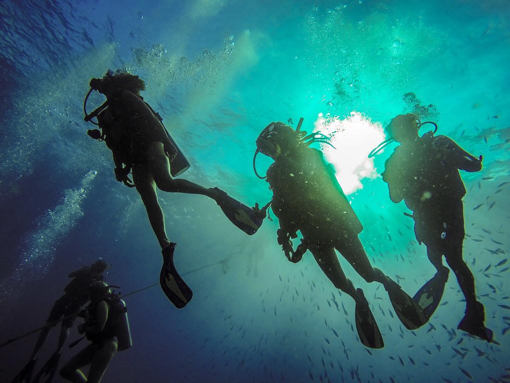 Roctopus Dive Koh Tao, Scuba Diving Thailand