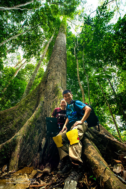 World's tallest tropical tree (Shorea faguetiana) - DSC_4871