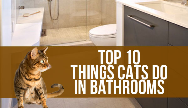 what-cats-do-in-bathroom