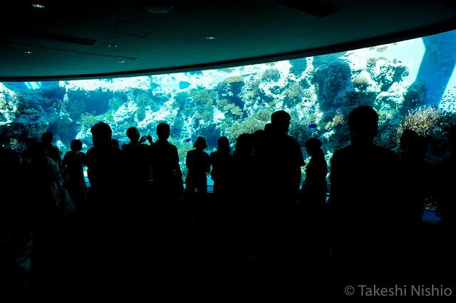 Churaumi Aquarium