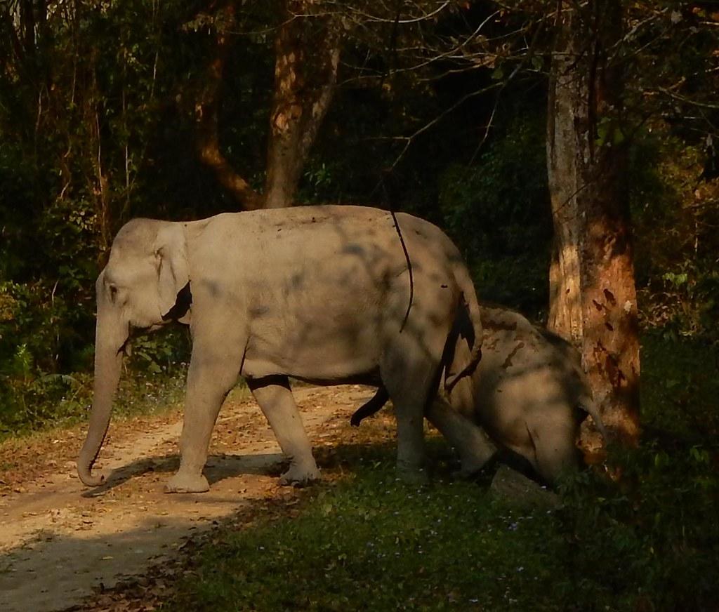 essay on kaziranga national park Photographs from kaziranga national park december 2011  essays around manaslu   outlook traveller july 2017 ladakh & markha : hindu business line blink april 2016.
