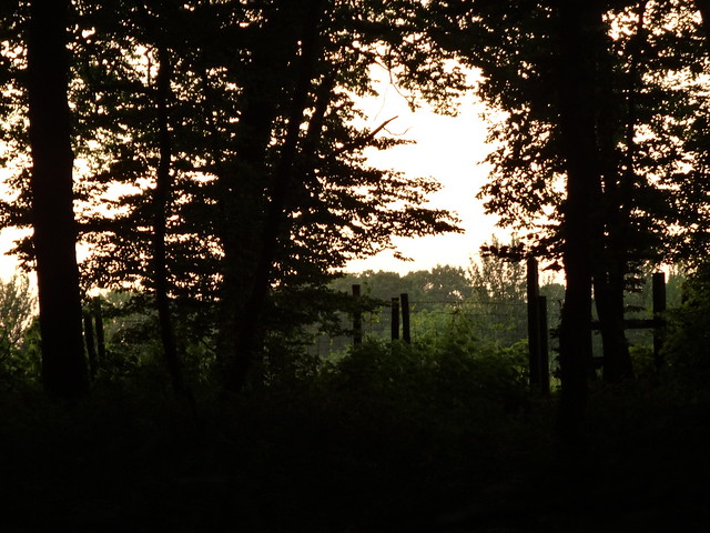 Evening Walk today.
