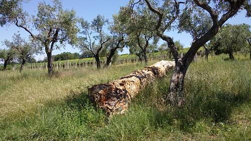 Estate in Abruzzo. Fiera di San Domenico, Orsogna (CH)  La ricchezza delle tradizioni più povere