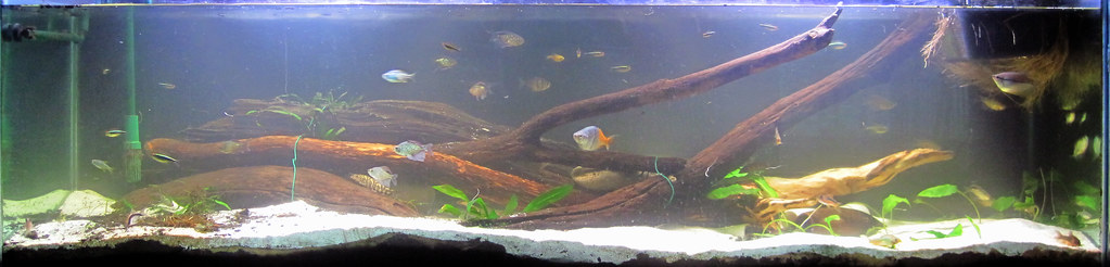 Large aquarium with a pile of intertwined logs in the back surrounded by white sand and a smaller number of plants