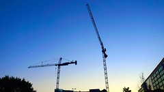 DC Dance of the Cranes 59086