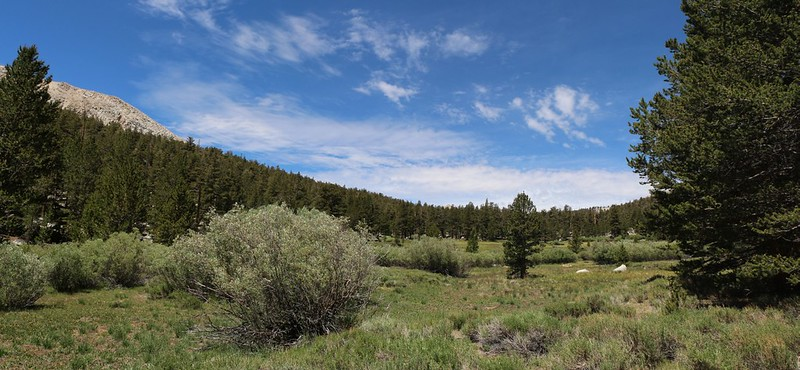 Large meadow along Cottonwood Creek