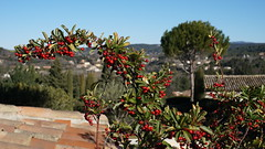 Winter light and nature, Aix-en-Provence
