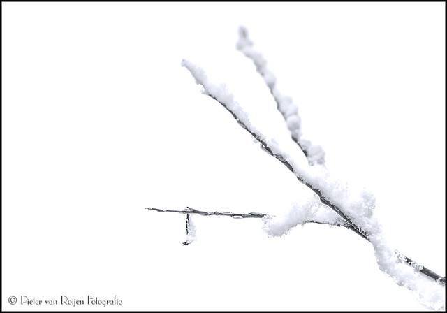 Snow wrapped twig.