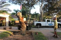 John's Tree