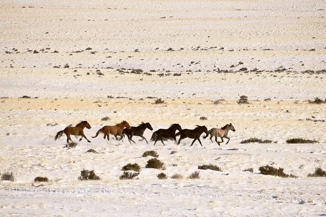 Sulphur 2017 Wild Horse Gather