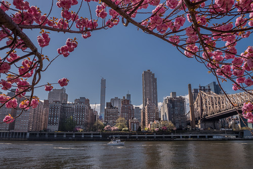 NYC in the Spring