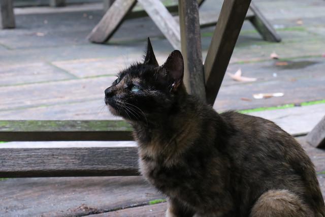pestering cat