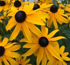 Summertime flora