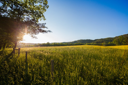 Summer in Cades Cove