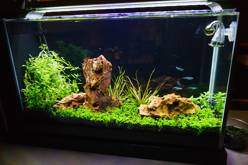 High Tech Fluval Aquarium